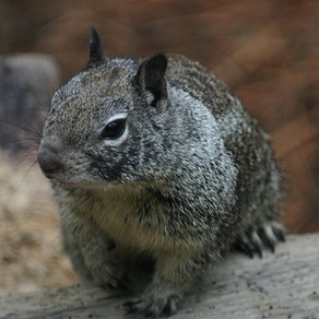 The diary of a Pest Interceptor - Squirrel Edition