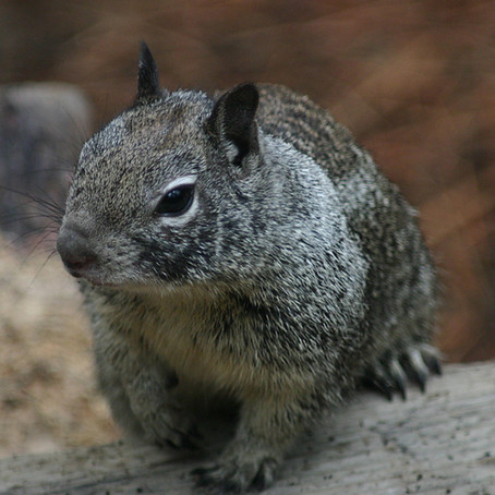 Squirrel Vs Bird Feeder.... Who wins?