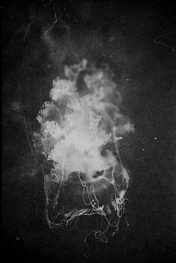 jelly fish, black and white photography italian