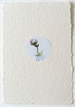 flower italian fine art photography