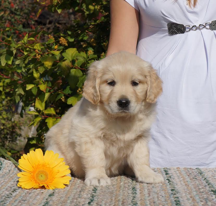 Leymary Sunflower