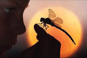 Dragonfly boy image.jpg