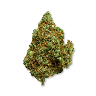 PURPLE HAZE BUD.png