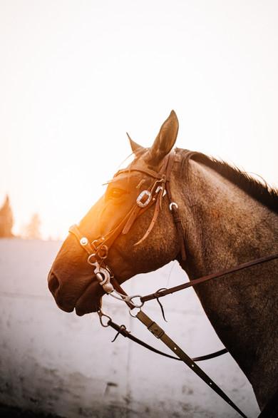 Sunset Horse - Idaho Landscape Fine Art Photography
