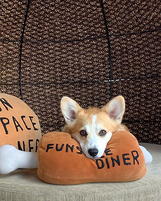 corgi_princess_mar_73285032_316723974331