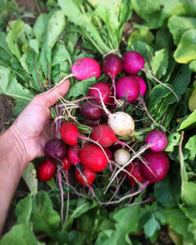 Plan B Organic Farm