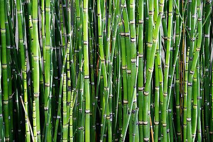 Over bamboescheuten, synchroniciteit en afwijzingsproblematiek