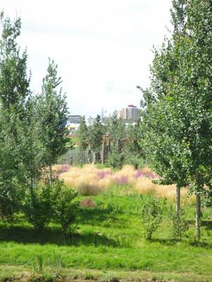 wetlands-06.JPG