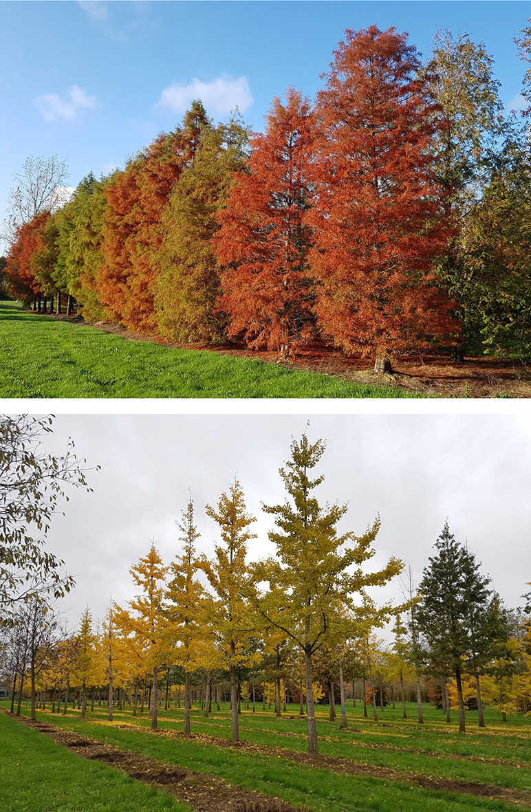 Who Doesn't Love Autumn?