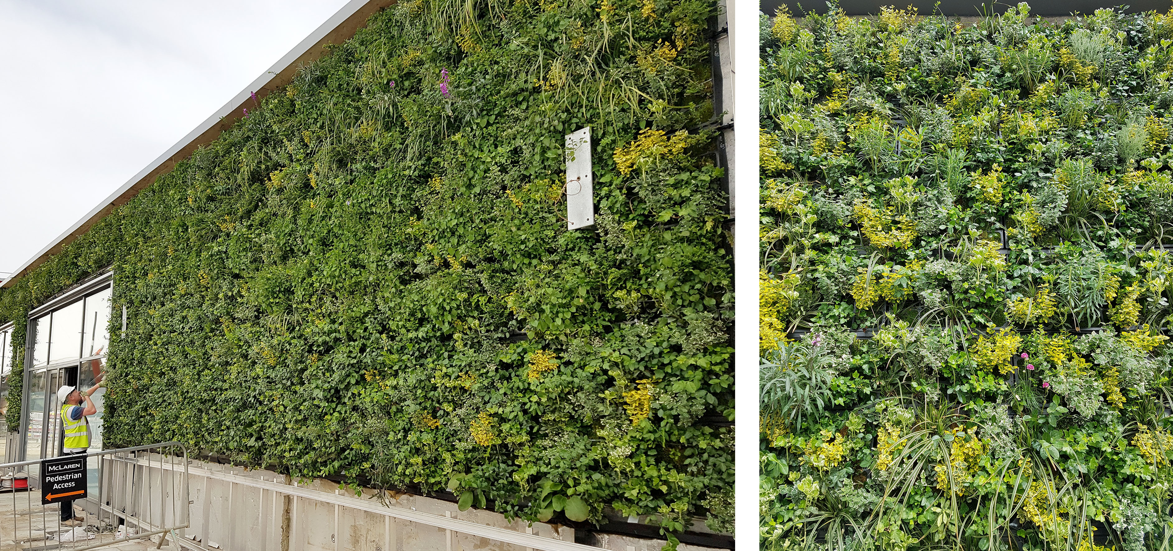 The Green Wall is Going Up!