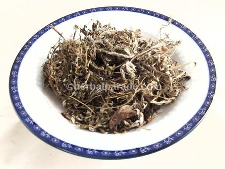委陵菜 (Potentilla Aiscolor Bunge)