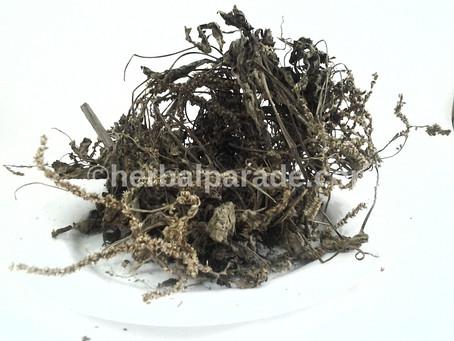 车前草 (Herba Plantaginis)