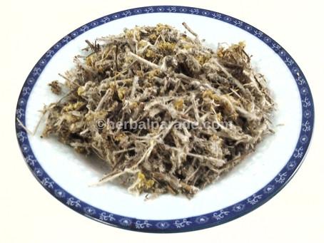 鼠曲草 (Herba Cudweed)