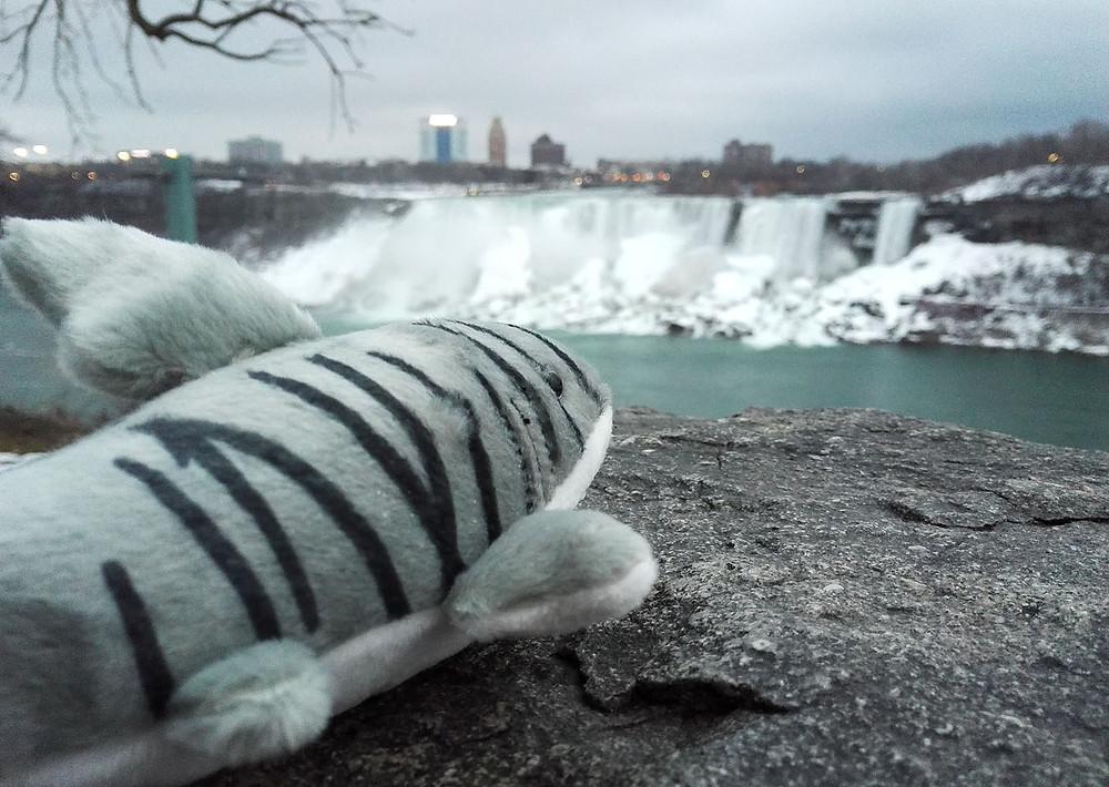 Niagara Falls shark