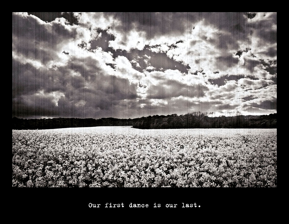 Rapeseed field in black and white