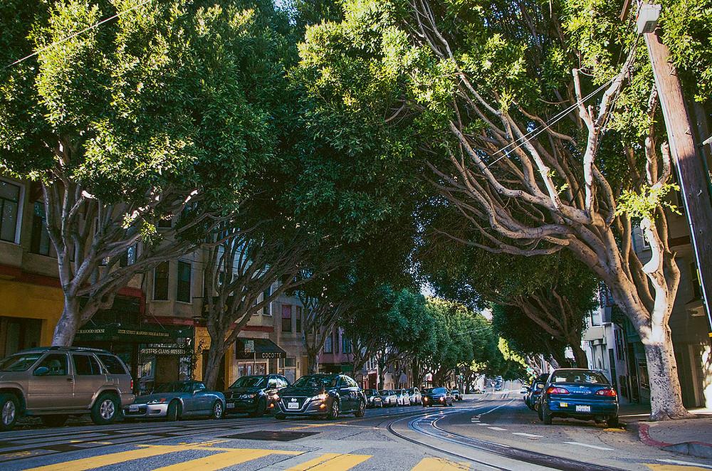 Tree-lined San Francisco street