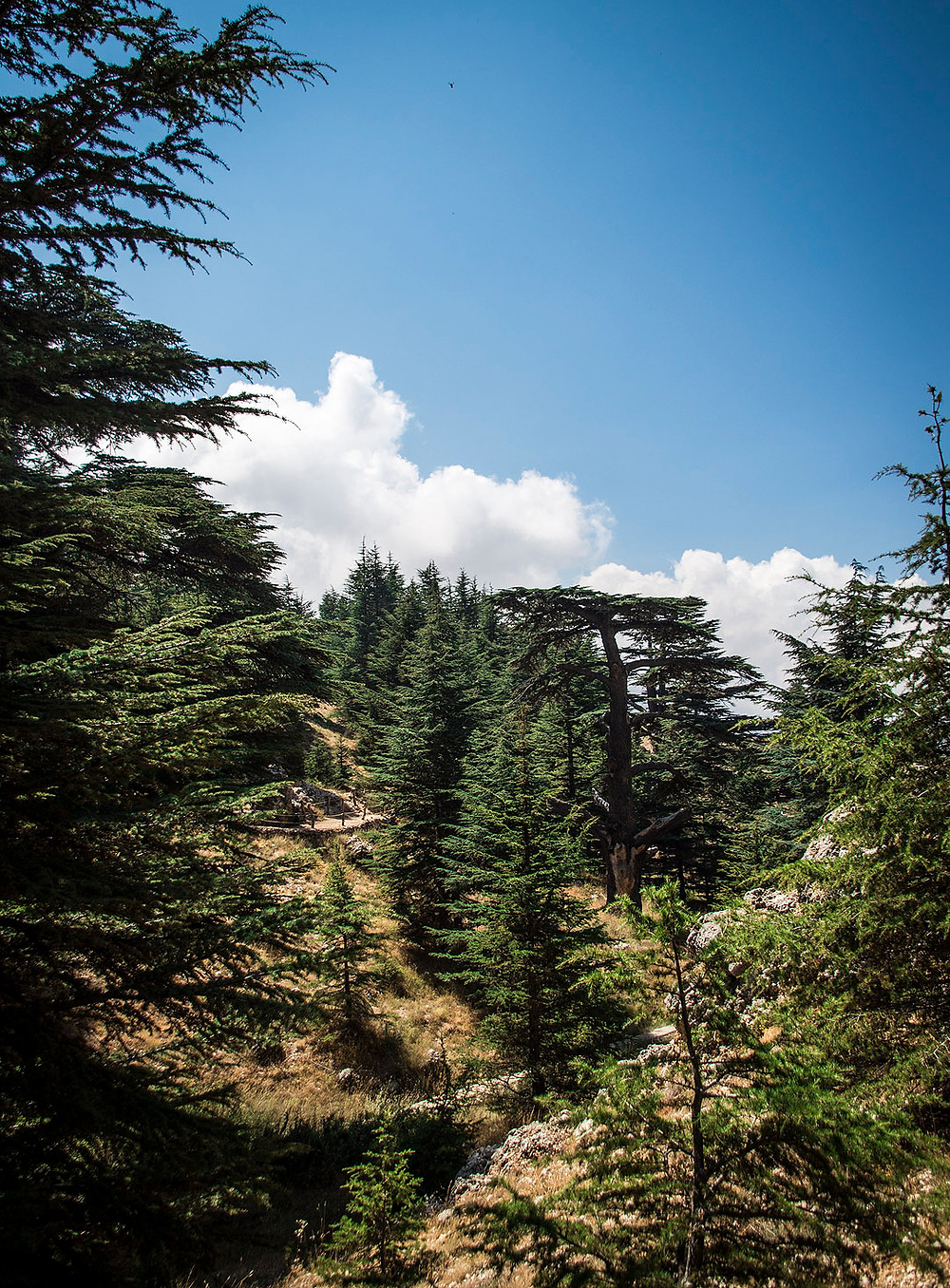 Cedars of God, Lebanon