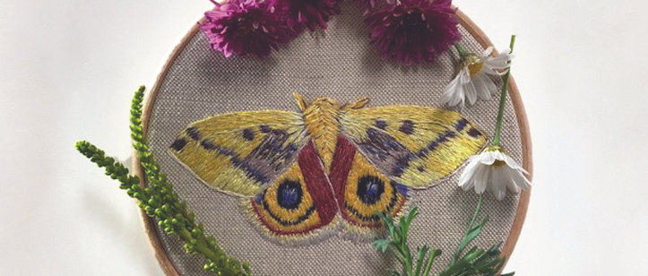 Embroidery Kit - Automeris Io Moth