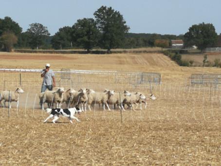 Formation Initiation: Education et dressagedu chien de troupeau