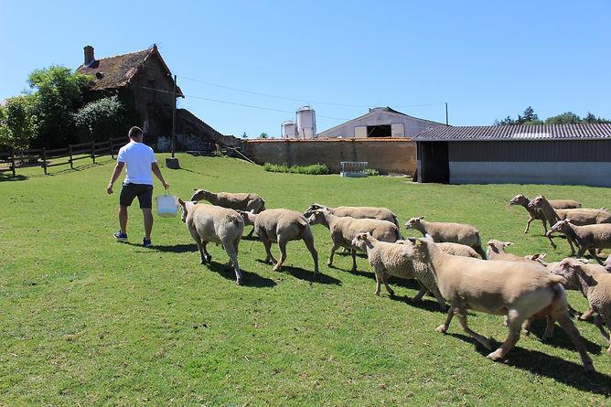 installation moutons.jpg