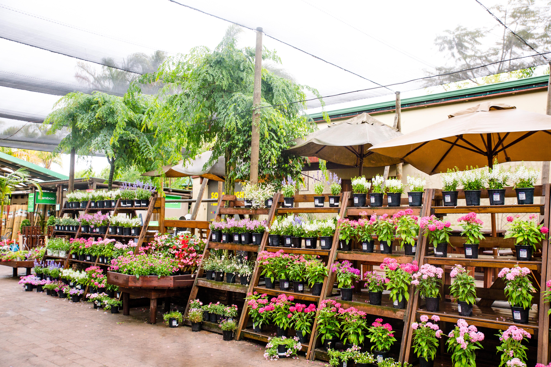 Cape Garden, flowers, nursery