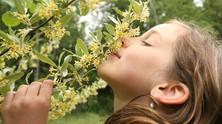 Plant a sensuous scented garden
