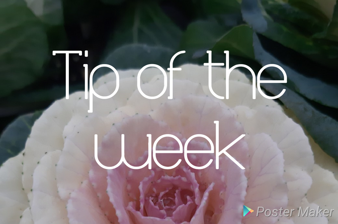 TIPS for the month of AUGUST