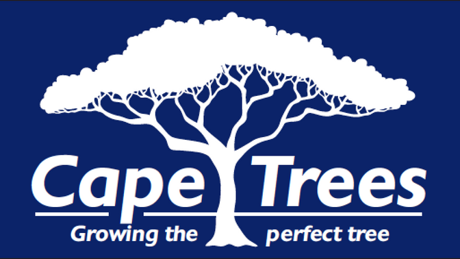 Introducing: Cape Trees