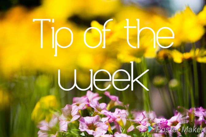 TIPS for the garden in SEPTEMBER
