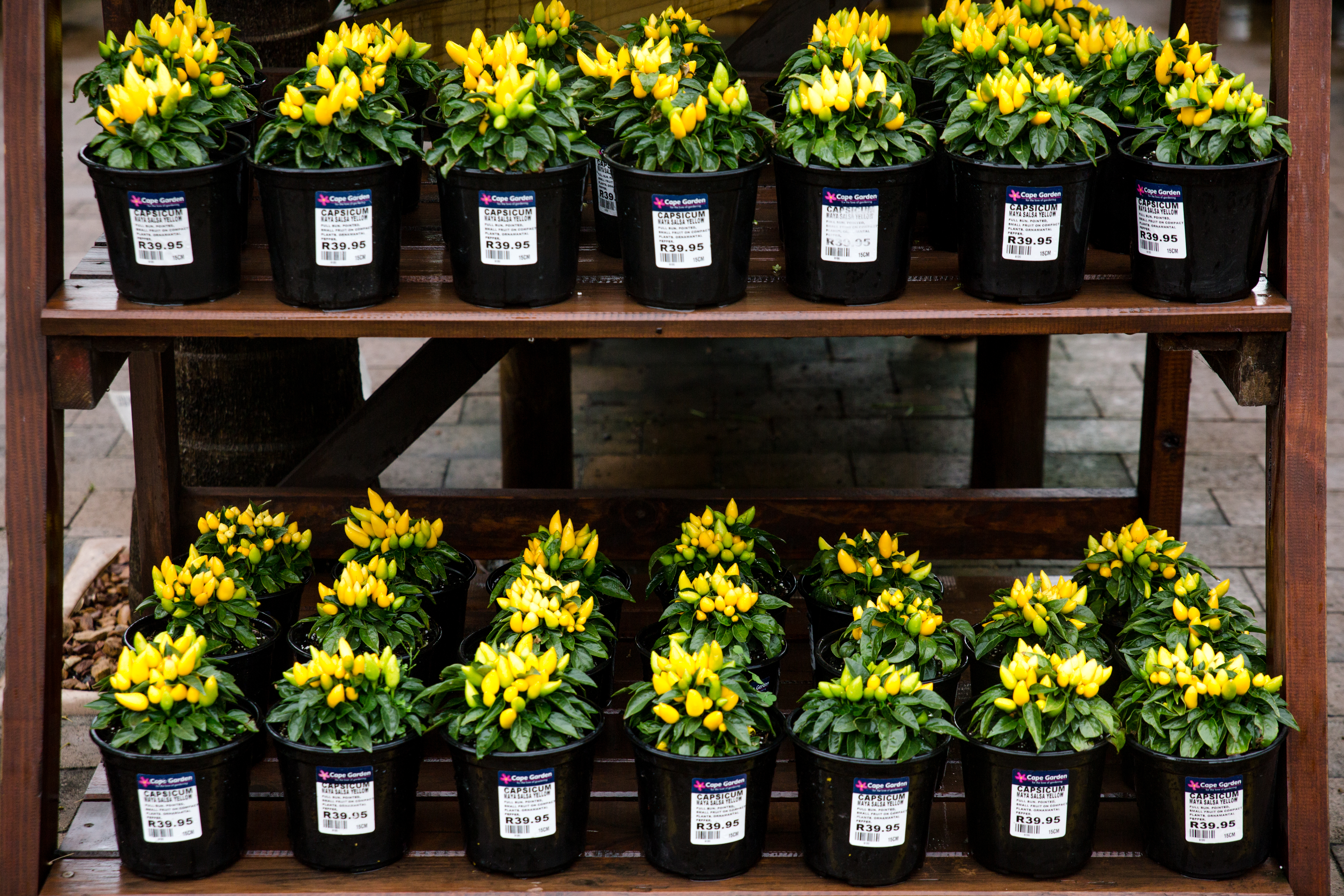 Cape Garden, flowers, nursery, plant