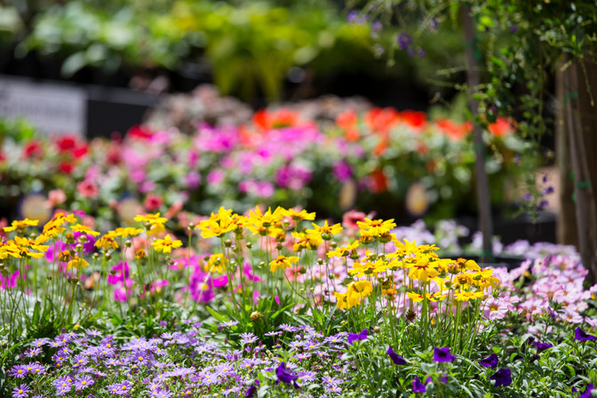 Celebrate Spring with colourful Seedlings!