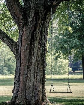 capegarden-online-trees-shop.jpg