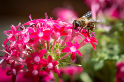 Cape Garden, flowers, bees, nursery