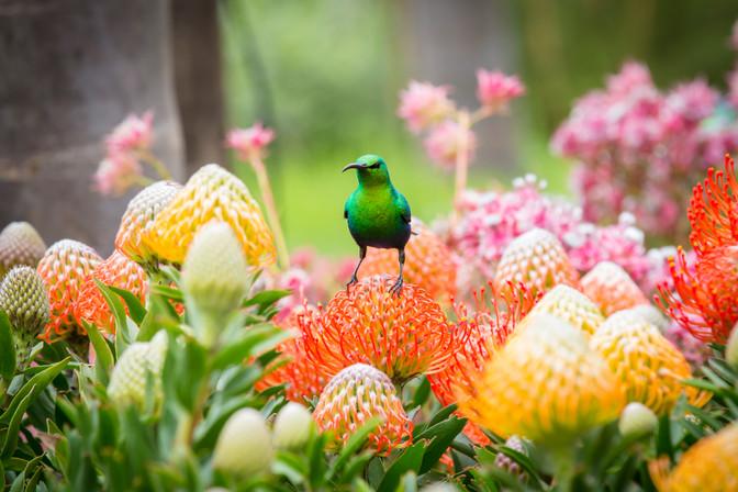 Create a bird garden