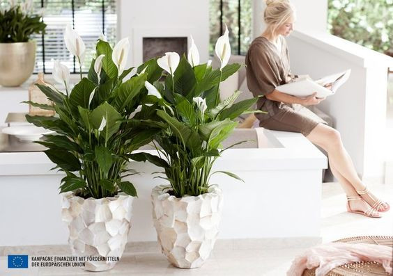 How indoor plants can give us a breath of fresh air – literally!