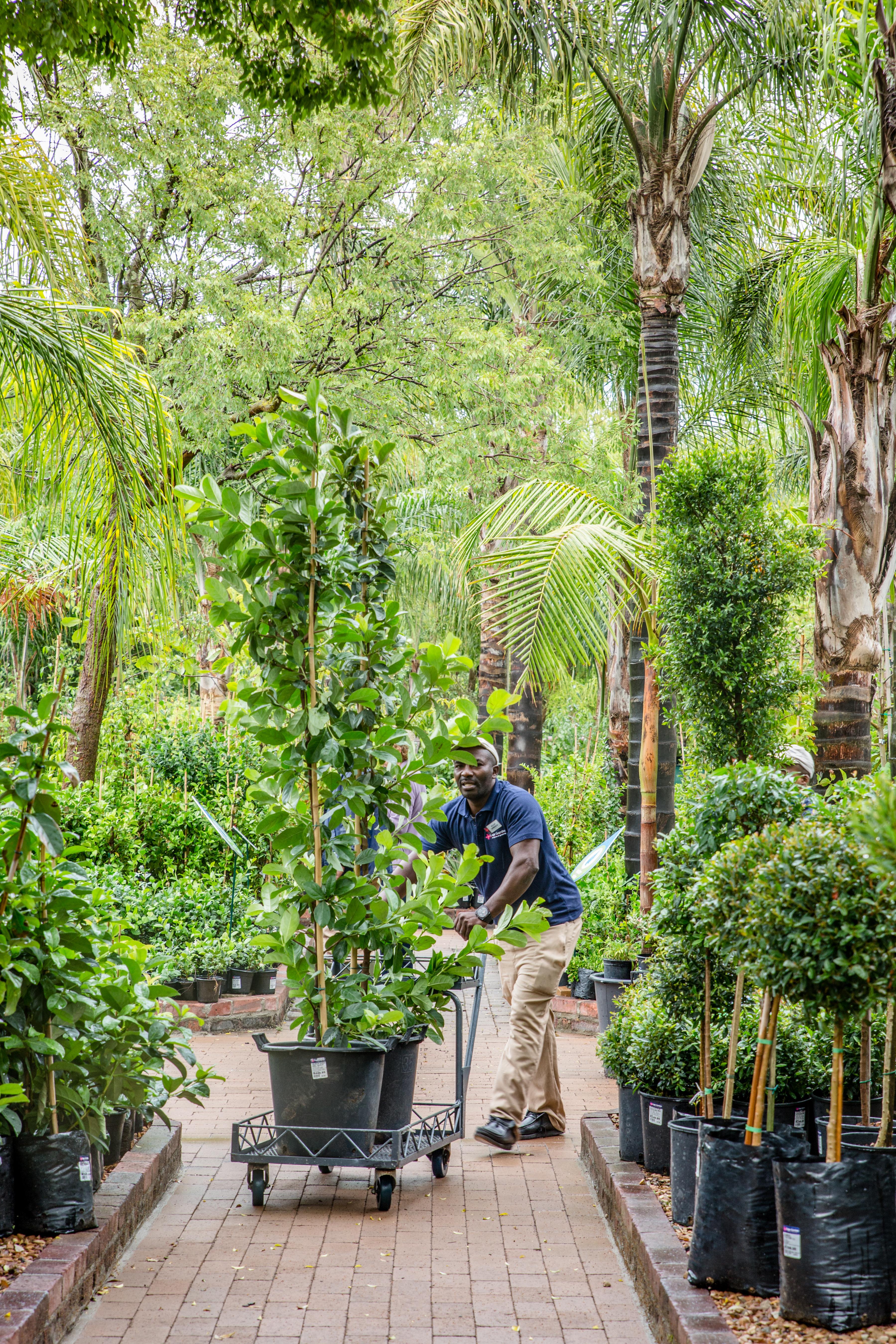 Cape Garden, Plants & Trees, Garden