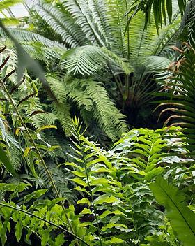 Ferns-palms-capegarden-online.jpg