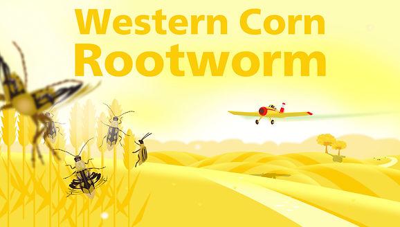 Thumbnail Western Corn Rootworm.jpg