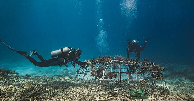underwater047.JPG