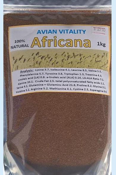 Africana seed - 2 sizes