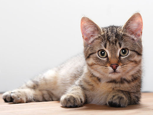 Meow Meow Cat Wallpapers 5.jpg