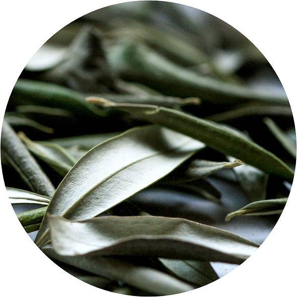Nazani Olive Leaf Tea