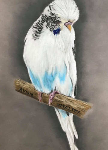 BIRD OF THE WEEK