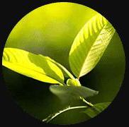 2020-06-22 07_57_23-Southeast Botanicals