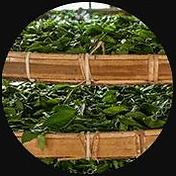2020-06-22 07_58_30-Southeast Botanicals