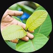 2020-06-22 07_57_50-Southeast Botanicals