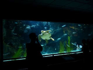 Smart Fish Tank Leads to Casino Breach