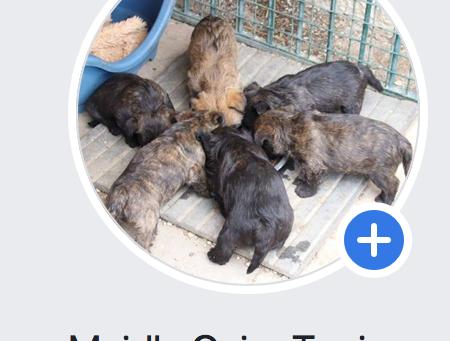 Facebook für aktuelle Neuigkeiten