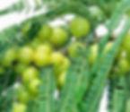 www.vishwavandeayurveda.com