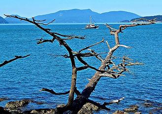 Washington Park tree.jpg